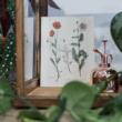 botanikai képek