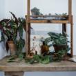 botanikai vintage nyomat