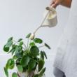 Növényápolási eszközök