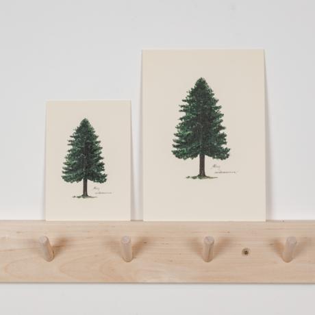 Botanikai képeslap gyermekláncfű