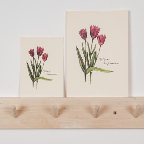 Képeslap tulipán
