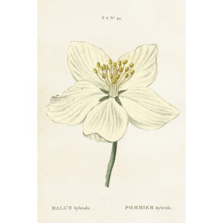Botanikai vintage képeslap