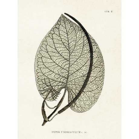 Botanikai vintage poszter