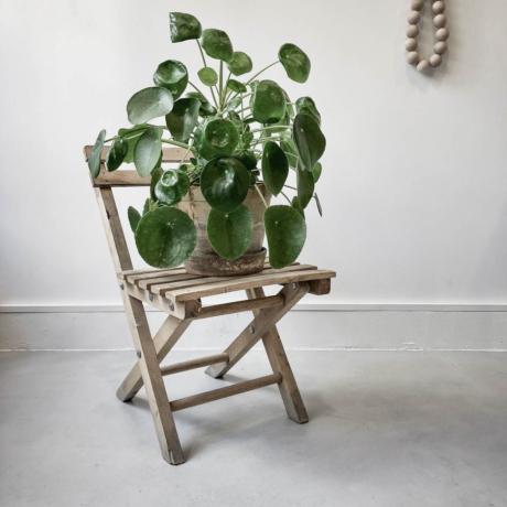 Pici régi szék virágtartónak