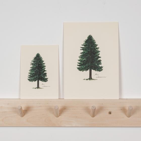 Print, fenyőfa