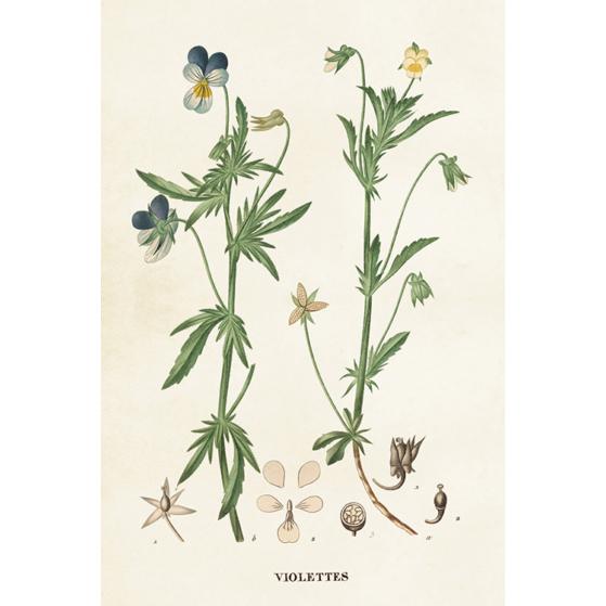 Botanikai képeslapok
