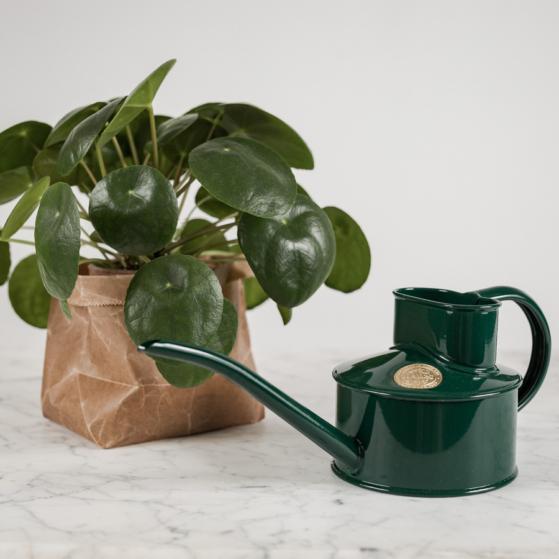 Szobai locsolókanna, zöld