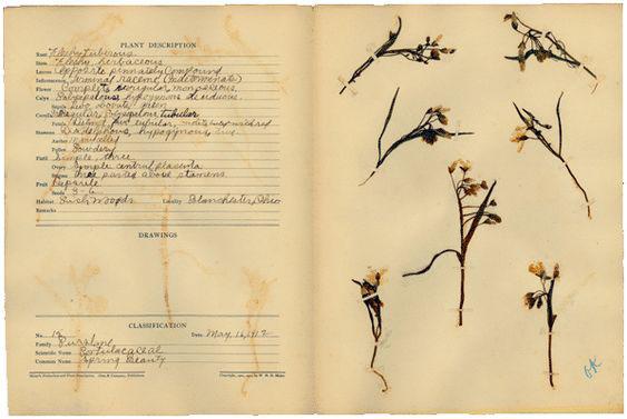 Herbárium - kép forrása Pinterest