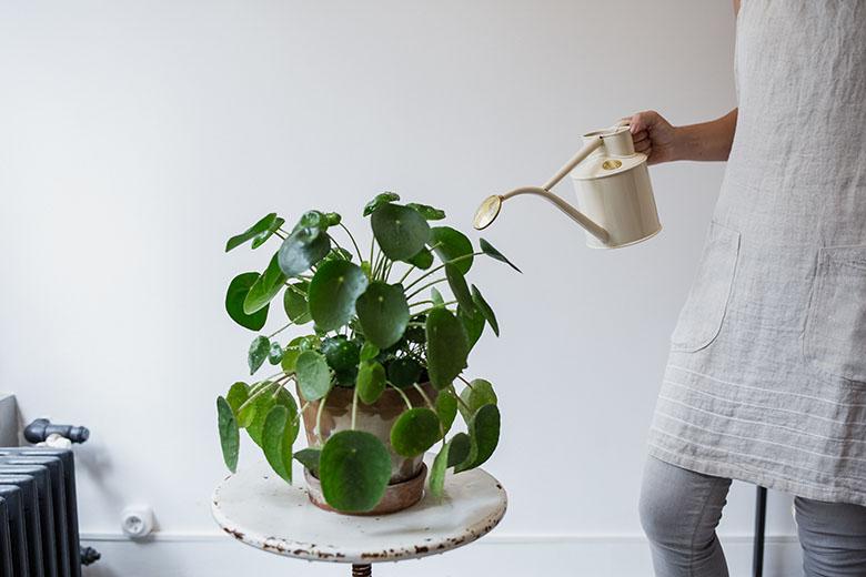 Virágterápia - Pauza etikus lakberendezés